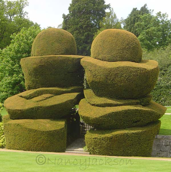 Topiary Yew