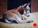 A Donkey's Rest (SOLD)