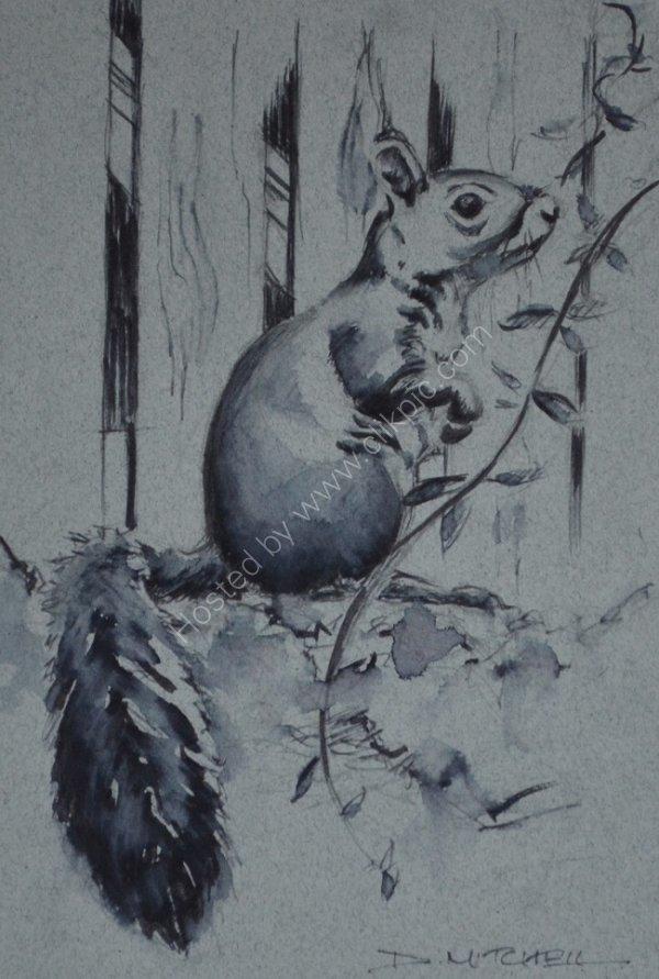 Grey Squirrel Ink Sketch