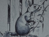 Grey Squirrel Ink Sketch