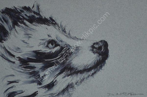 Racoon Dog Ink Sketch