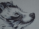 Racoon Dog Ink Sketch
