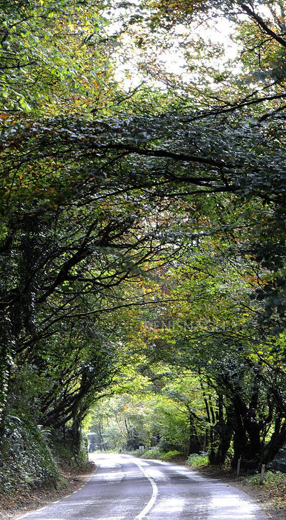 Ballea Road, Carrigaline, Co Cork, Oct '14