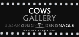 COWS GALLERY START