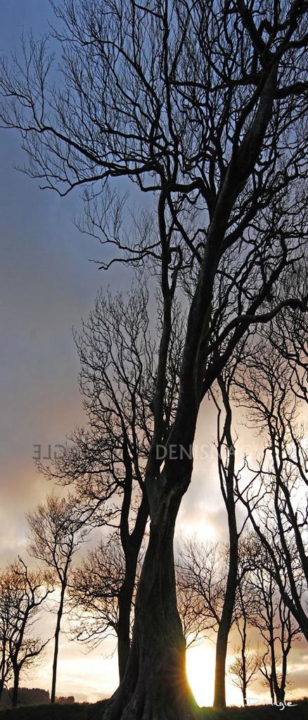 Aghamarta , Carrigaline , Co. Cork , Feb ' 09 .