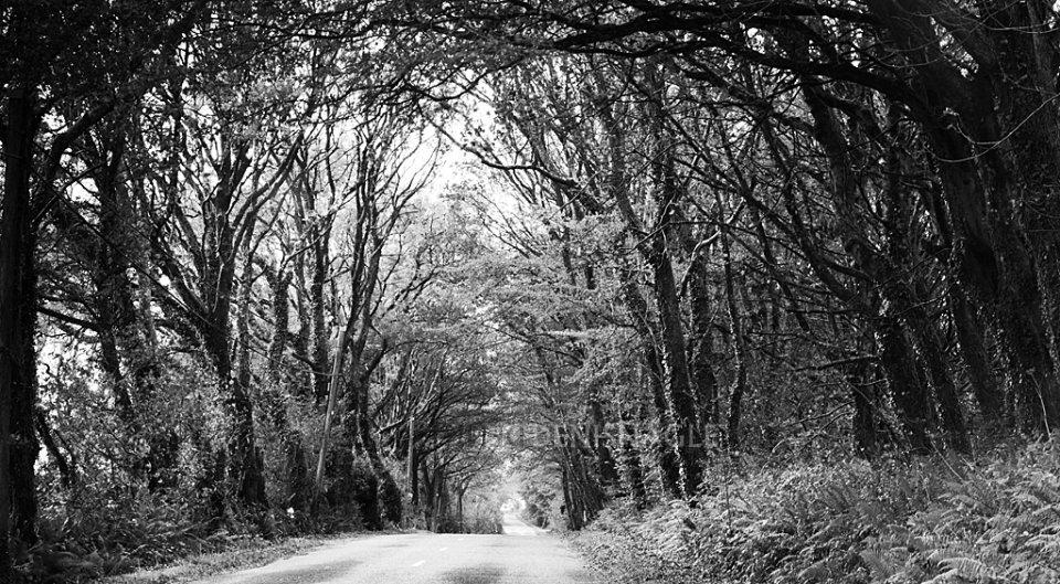 The Road to Minane Bridge, Carrigaline, Co Cork, Oct '14