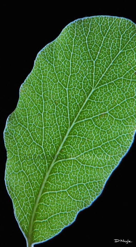 Leaf Detail , Co. Cork , Oct ' 08 .