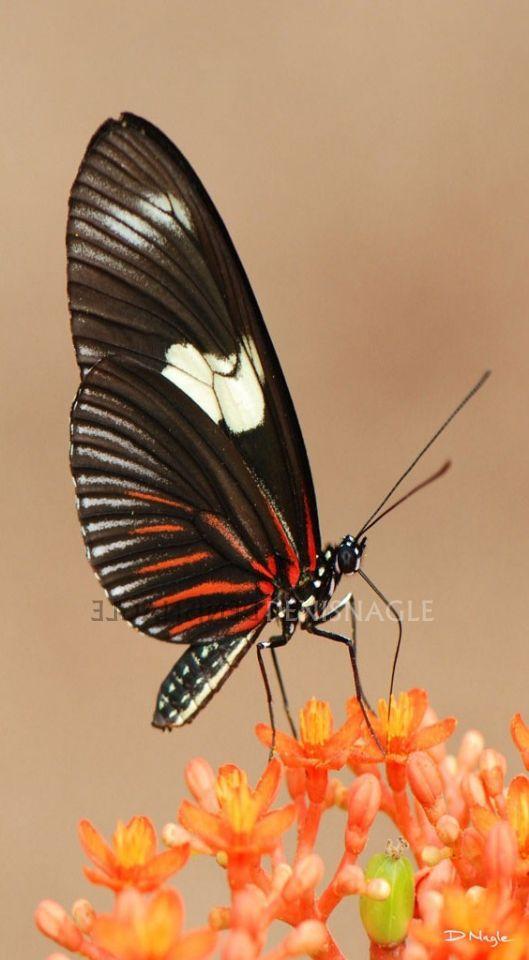 Butterfly , Amazon , Ecuador S.A , Dec ' 06 .