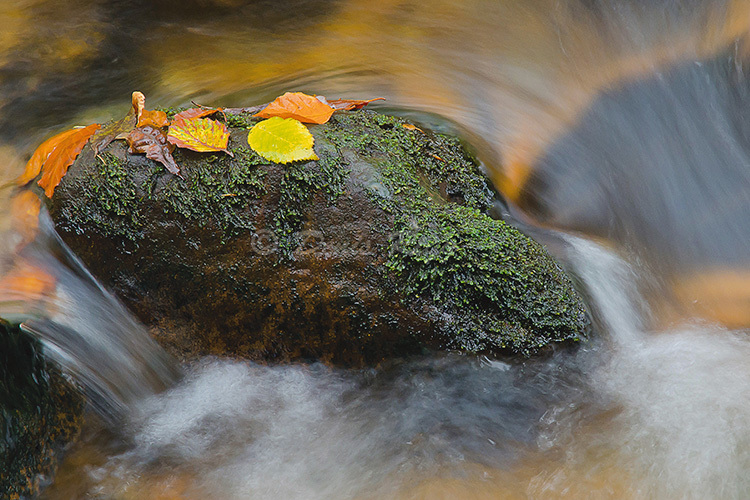 111-Autumn leaves and water