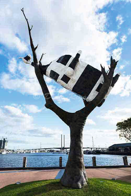 211-Cow in tree, Melbourne