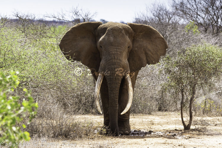 416-Elephant