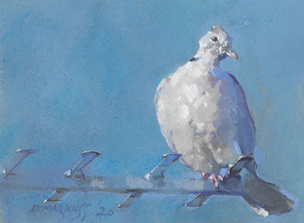 collared dove, bird, painting, gouache