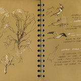 Sketchbook images, from around Leighton Moss Nature Reserve