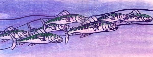 Hunting Mackerel