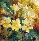 Golden Primroses