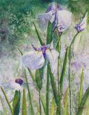 Lilac Irises - sold