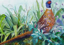 Summer Pheasant - sold