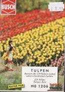 Busch Tulips