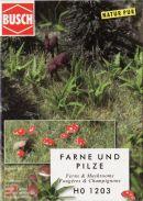 Busch ferns and mushrooms