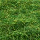 Long fibres - lush green