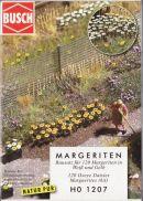 Busch Marguerites