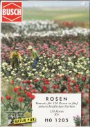 Busch Roses