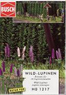 Wild Lupins