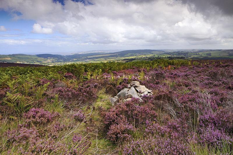 Dunkery Hill, Exmor, North Devon