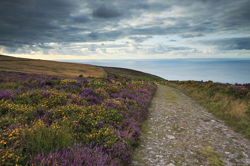Coastal footparth around Holdstone Down, Exmoor, North Devon