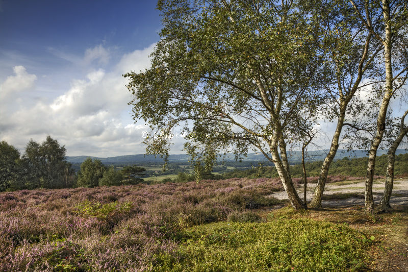 A view from top of Hesworth Common, West Sussex