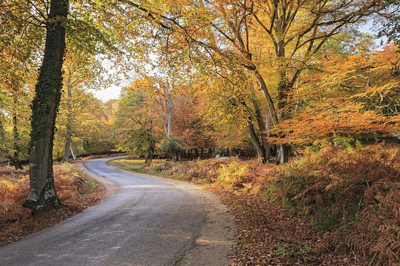Bolderwood Ornamental Drive.