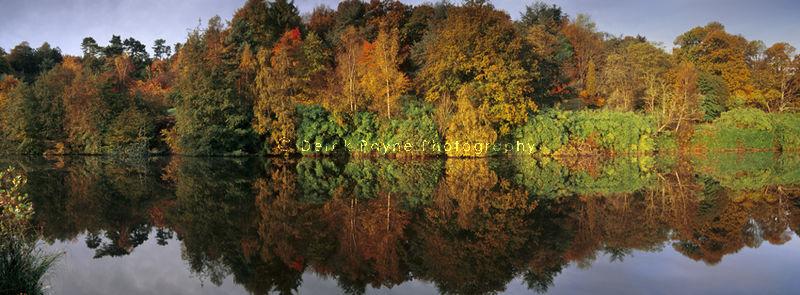 Autumn Reflection, Winkworth, Arboretum, Surrey