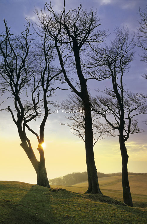 The Morning Sun on Chanctonbury Ring, West Sussex