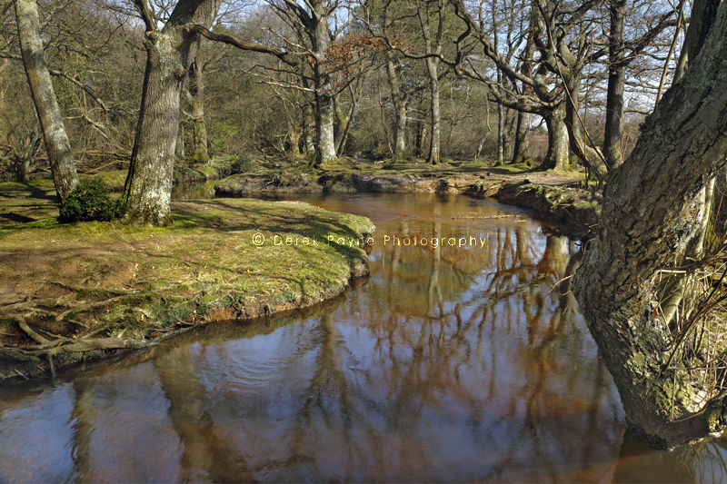 Ober Water, New Forest, Hampshire.
