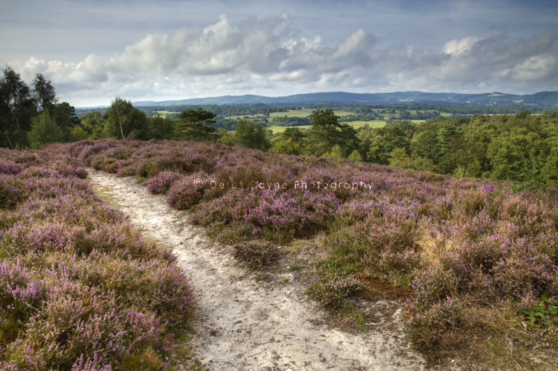 View from Heather covered Hesworth Common, West Sussex
