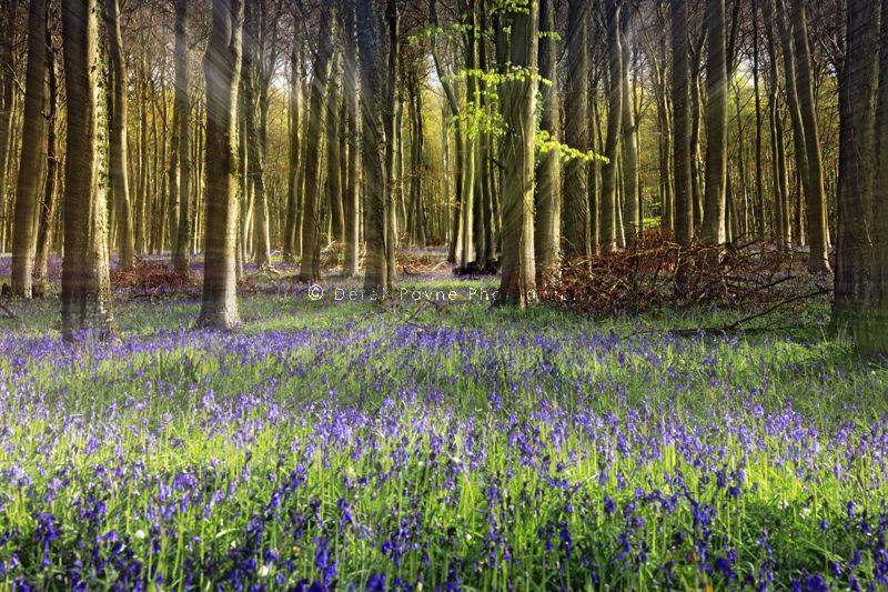 Shafts of light, Angmering Park, West Sussex