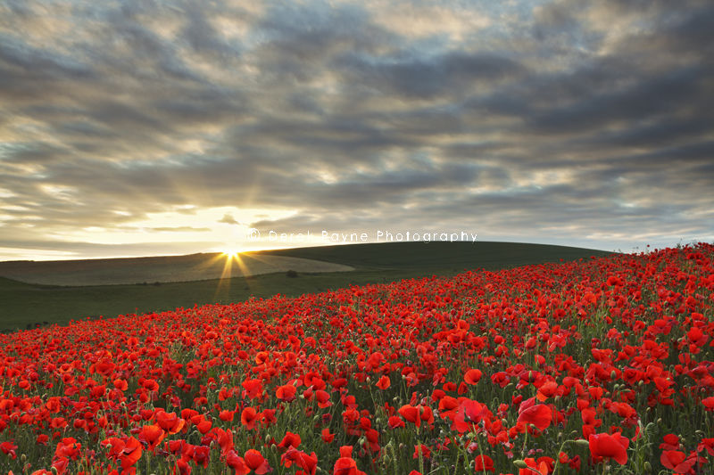 Poppy Sunset, South Downs, West-Sussex