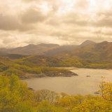 Scottish Highland 2