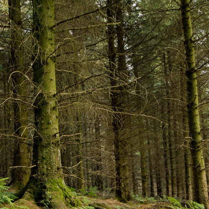 Forest on Cefn Hill
