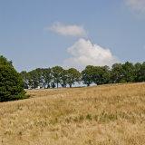 Bacton hillside