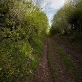 A farm access road