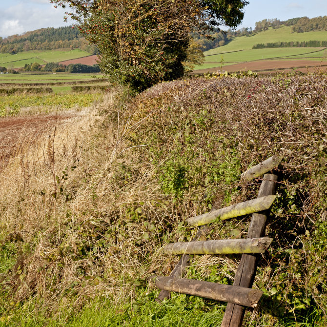 Headland and hedge