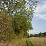 Trees on the Herefordshire Trail