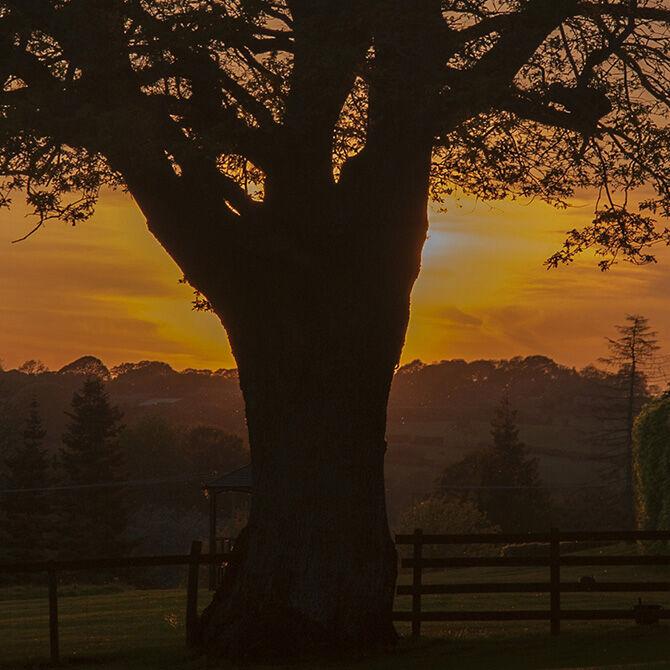 A sunny evening at Poston Mill