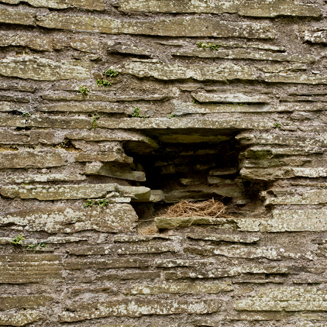 Bird's nest at Longtown Castle