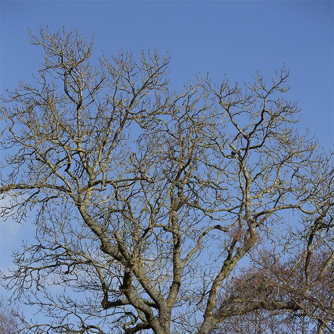 Bare winter trees set against blue sky