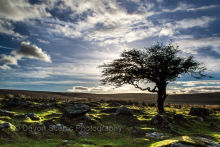 Late Afternoon near Coombestone Tor DM17