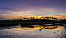 Budleigh Sulterton Sunrise DV51