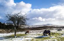 Darmoor in the snow DM18