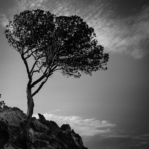 Tree & Sky, Cala Montjoi, Spain 2013